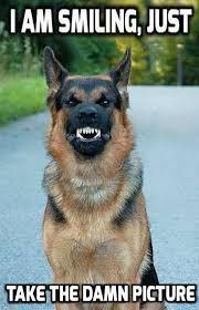 Dog Smiling Meme - military service dog memes funny heartwarming photos thechive com