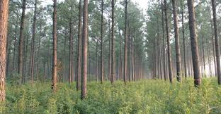 Mississippi forest images 2011 forest products harvest tops 1 billion in mississippi jpg