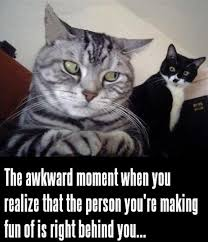 Sarcastic Cat Meme - 25 funny cat memes that will make you lol
