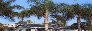 bowman plant tree care specialists serving san diego
