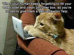 Funny Animals Meme - pin by julie ann on so furry pinterest funny animal pictures