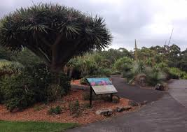 Botanical Garden Wollongong Succulent Garden Is Superb Picture Of Wollongong Botanic Garden