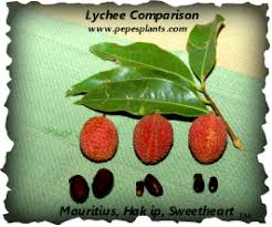 this site offers you great information to help you grow lychee