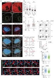 ephrin b1 u2013mediated repulsion and signaling control germinal center