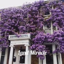 compare prices on wisteria flower seeds online shopping buy low
