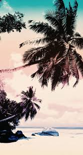 Palm Tree Wallpaper 28 Best Wallpaper Images On Pinterest Wallpaper Backgrounds