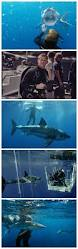 690 best sharks images on pinterest shark week nature and ocean