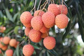 lychee fruit lychee heaven matt eats gympie