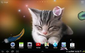 cute halloween kitten wallpaper sleepy kitten wallpaper lite android apps on google play