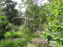 curly willow trellis vegetariat