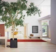 emejing best indoor tree pictures interior design ideas