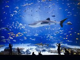 Georgia Aquarium Floor Plan The World U0027s Largest Aquarium Georgia Aquarium Water House And
