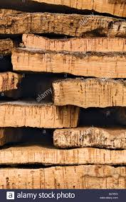 Cork Material Cork Material Harvested In Algarve Portugal Mostly Used For