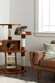 the best places in your home for a cat tree overstock com