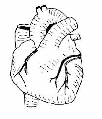 Diagram Heart Anatomy The Anatomy And Physiology Of Animals Heart Worksheet Wikieducator