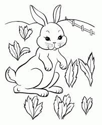 bunny coloring pages art galleries in rabbit coloring pages free