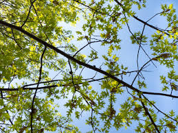 green leaves on tree branches mmt