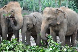 facts and photos for national elephant appreciation day