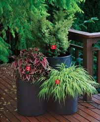 Potted Plant Ideas For Patio by Stylish Shady Containers Fine Gardening
