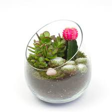 the sideways diy succulent terrarium kit juicykits com