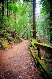 218 best wall murals images on pinterest wall mural photo beautiful muir woods walking trail click to zoom