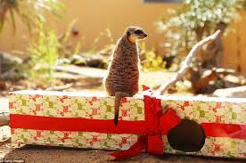 Beautifully Wrapped Gifts - sydney u0027s taronga zoo celebrate christmas early with animals