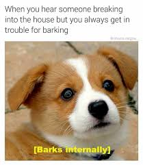 Dog Barking Meme - w h i m p e r dog is afraid to bark dogs know your meme
