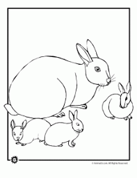 bunny coloring pages printable bunny coloring pages animal jr