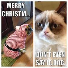 Grumpy Cat Memes Christmas - merry christmas grumpy cat grumpy cats worst christmas ever
