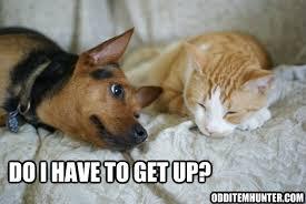 Sleeping Cat Meme - cat meme odd item hunter