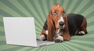 Are All Dogs Colour Blind Dog Lover U0027s Magazine Premier Online Magazine For Dog Lovers
