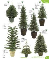 evergreen tree chart school stuff evergreen trees
