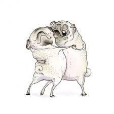 drawn pug business pencil and in color drawn pug business