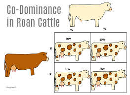 incomplete dominance is an intragenic allelic gene interaction