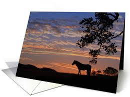 loss of pet sympathy cards for loss of sympathy cards