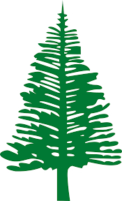 norfolk pine christmas tree clipart clip art decoration