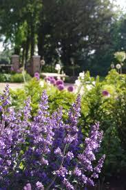 Landscape Flower Garden by The 29 Best Images About Landscape Flower Garden On Pinterest