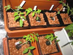 light requirements for growing tomatoes indoors indoor hydroponic gardening sle indoor hydroponic gardening