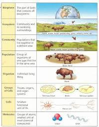 biology levels of organiation free homework help