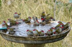 the secret world of bird baths australian geographic