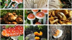 Mushrooms Growing In Backyard 5 Mushroom Growing Projects For The Fall Garden Mnn Mother