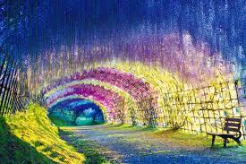 a colorful walk wisteria tunnel at kawachi fuji gardens japan