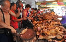 chien cuisine festival de la viande de chien chine informations