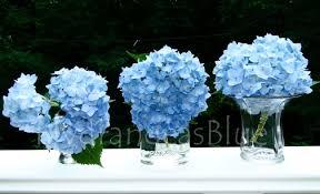 Blue Flower Vases Vases Filled With Light Blue Hydrangeas Hydrangeas Blue