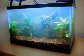 aquarium halloween how to fix bacterial bloom in your aquarium