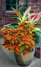loads of color in this shade pot destinationviola container