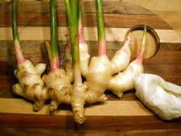 Is Ginger Root A Vegetable - windcrest farm certified organic vegetable herb u0026 flower plants