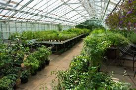 serre horticole en verre l u0027intérieur d u0027une serre horticole couverts en plastique de fleurs