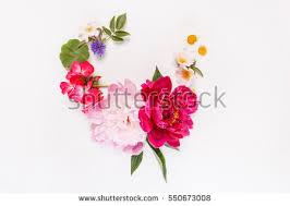 Nice Flowers Nice Flowers Stock Photo 550673008 Shutterstock
