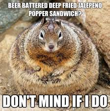Squirrel Meme - 35 very funny squirrel meme pictures and images